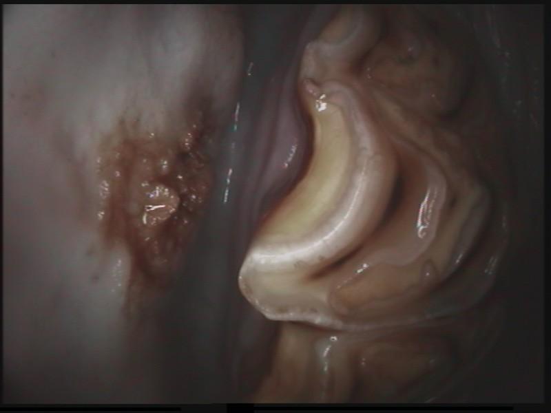Die Zahnbehandlungen des HippoDoc